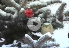 Embedded thumbnail for С Новым годом садоводы!