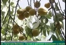 Embedded thumbnail for Экзотические фрукты выращивает южноуралец на своем садовом участке